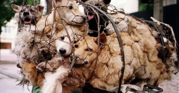 Çin'in Shenzhen Kentinde Kedi ve Köpek Eti Tüketimi Yasaklanıyor