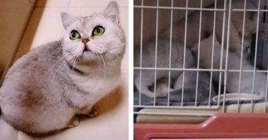Kahraman kedi Lele: Ailesi karantinaya alındı, ama o hayatta kalmayı başardı!