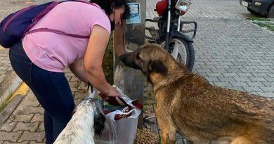 Artvin'de kaybolan sokak köpekleri, hayvan severleri ayağa kaldırdı