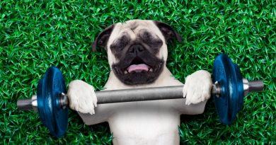 Yorgun Köpek Mutlu Köpektir!
